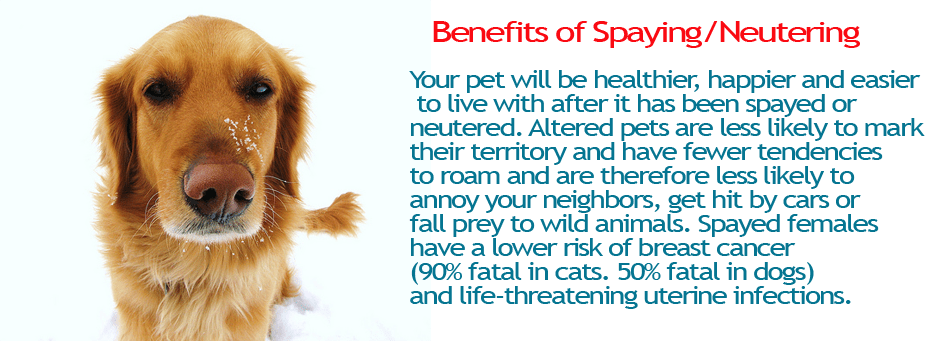 benefits of spay or neutering animals
