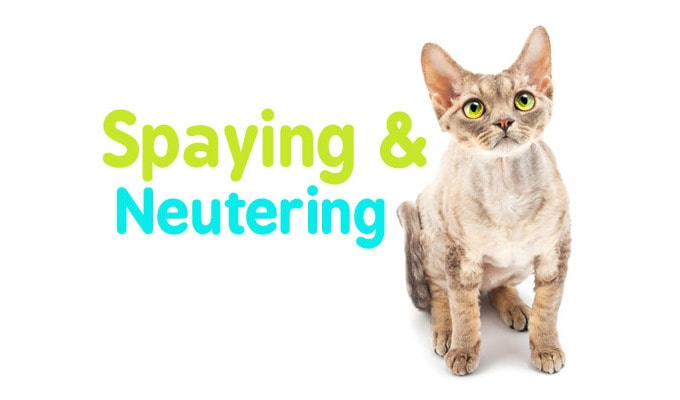 spaying-neutering