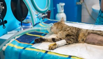 neutering and spaying pet
