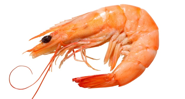 shrimp vs prawn what are the differences